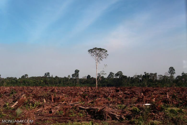 Forest cleared for palm oil production [riau_5928]
