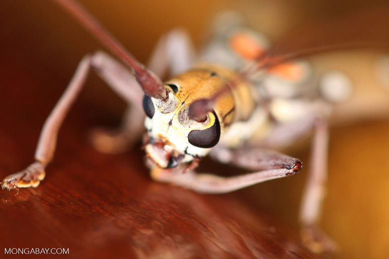 Polka-dotted beetle