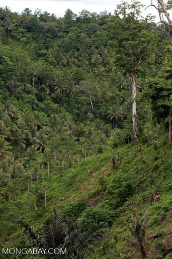 Deforestation on the edge of Tangkoko Reserve