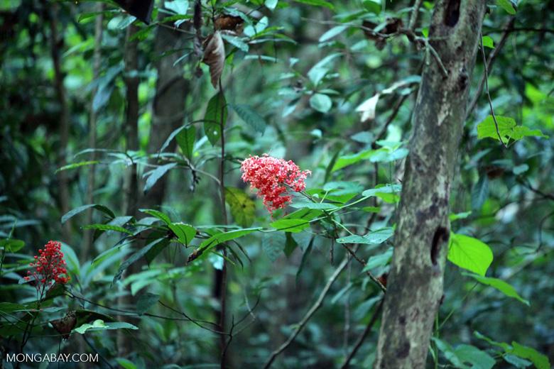 Red rainforest flowers