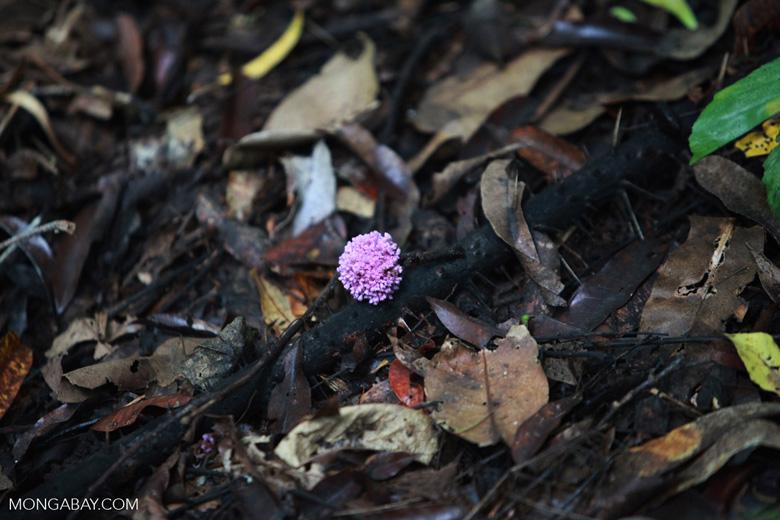 Lavendar flowers in the rainforest