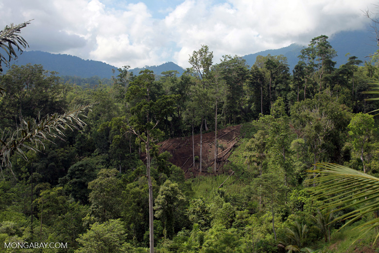 Deforestation on the edge of Tangkoko Reserve