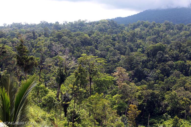 Tangkoko rainforest