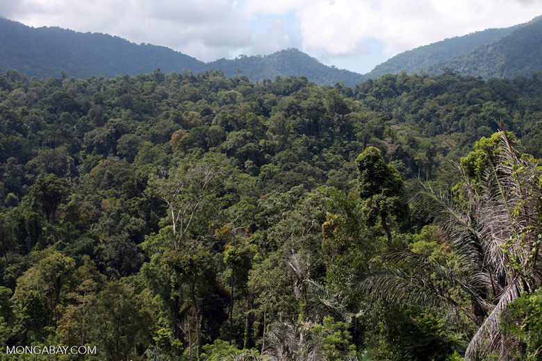 Tangkoko rainforest