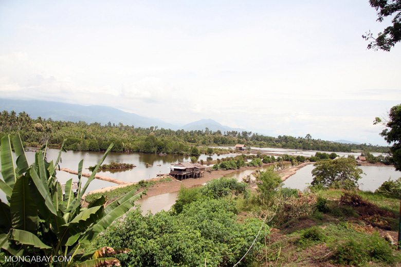 Former mangrove swamp that has been converted to a shrimp farm in Sulawesi, Indonesia. Photo by Rhett A. Butler.