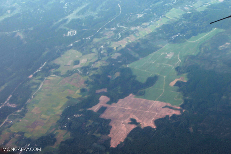 Forest cleared for oil palm cultivation