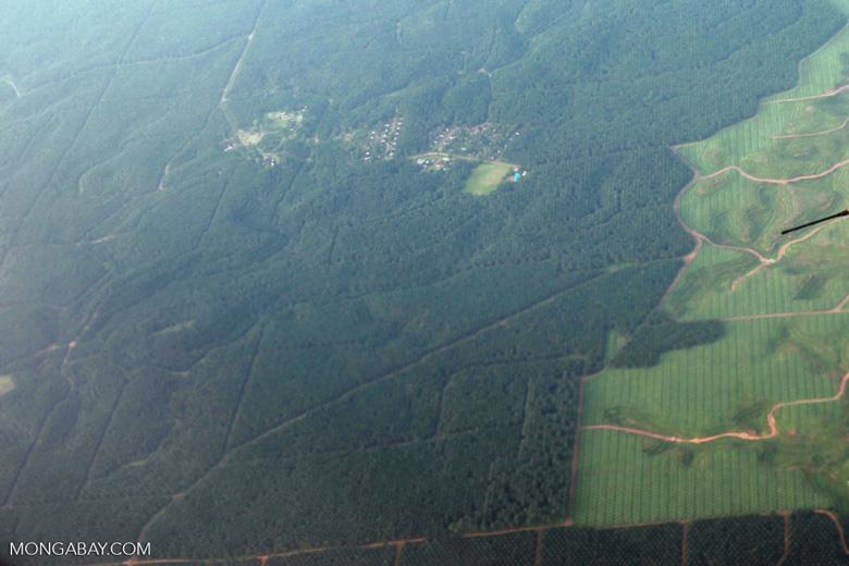 New oil palm plantings on Sumatra