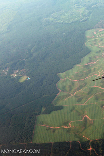 New oil palm plantings on forest land in Sumatra