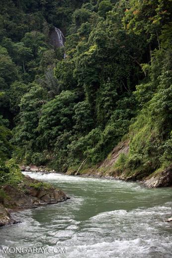 Bohorok River [sumatra_0186]