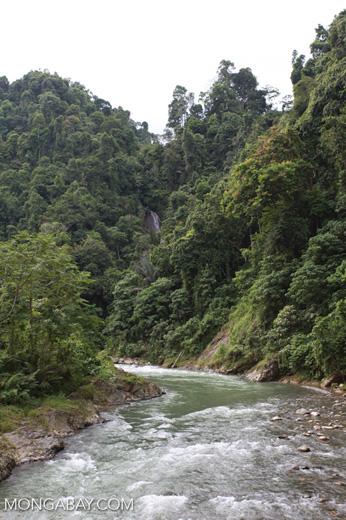 Bohorok River [sumatra_0189]