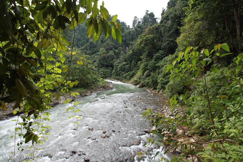 Bohorok River [sumatra_0196]
