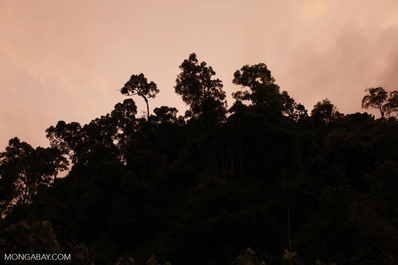 Rainforest vegetation at sunset
