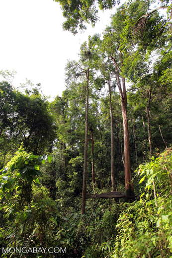 Gunung Leuser jungle