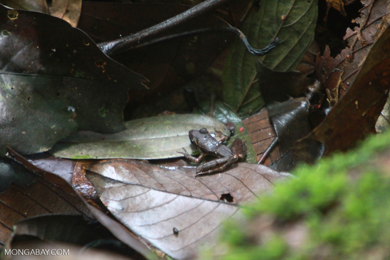 Tree frog on the forest floor