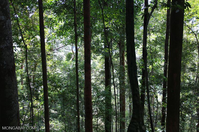 Sumatran rainforest [sumatra_0493]