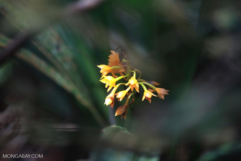 Yellow rainforest flowers