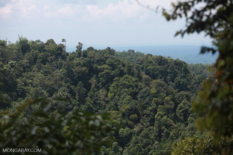 Rainforest outside of Gunung Leuser national park