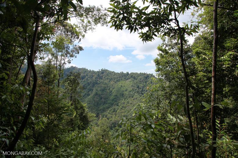 Slash-and-burn near Gunung Leuser national park [sumatra_0547]
