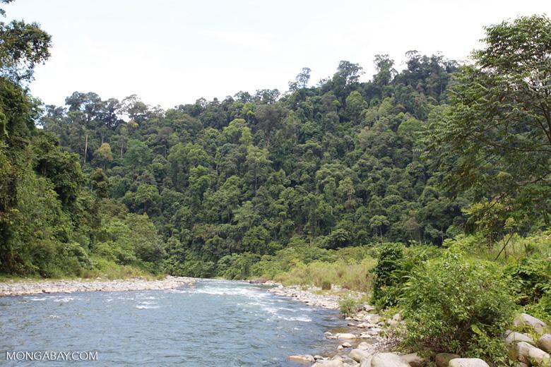 Rainforest along the Bohorok river [sumatra_0580]