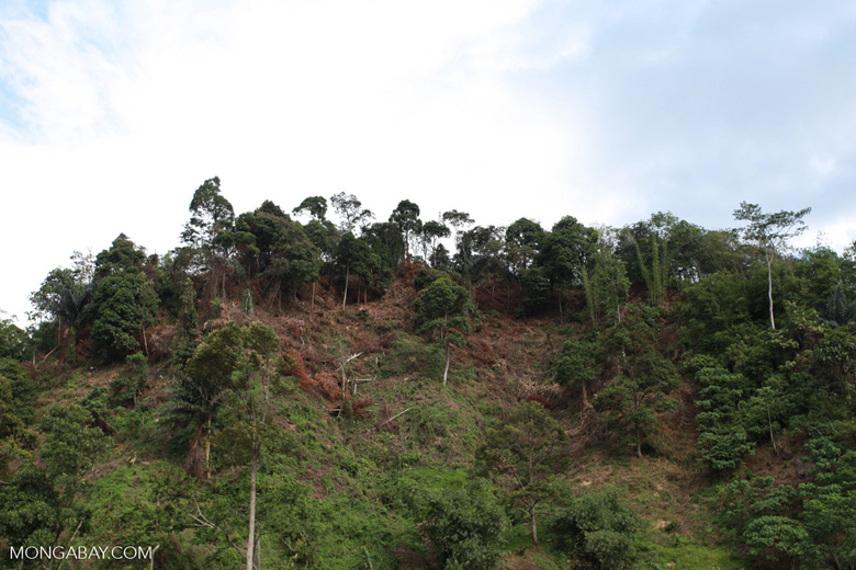 Forest clearing about Bukit Lawang