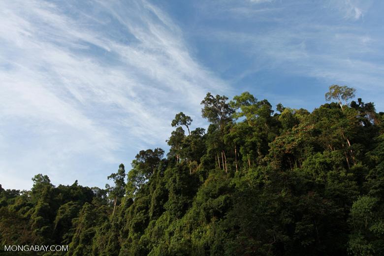 Gunung Leuser Rain Forest