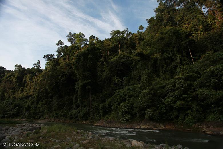 Rain forest along the Bohorok River [sumatra_0633]