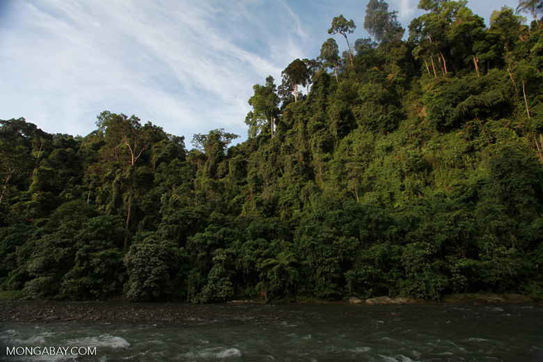 Rain forest along the Bohorok River [sumatra_0642]