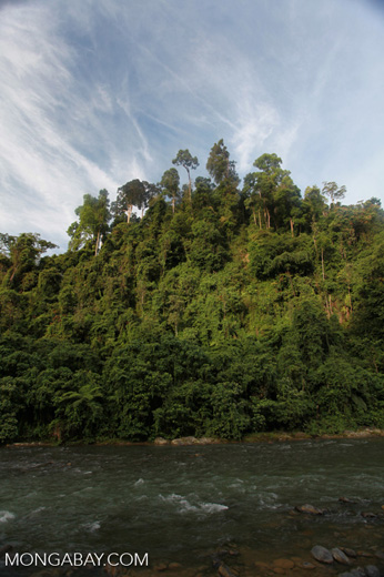 Rain forest along the Bohorok River [sumatra_0643]