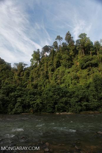Rain forest along the Bohorok River [sumatra_0645]