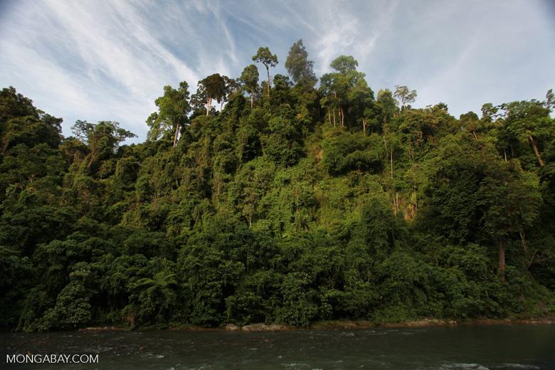 Rain forest along the Bohorok River [sumatra_0647]