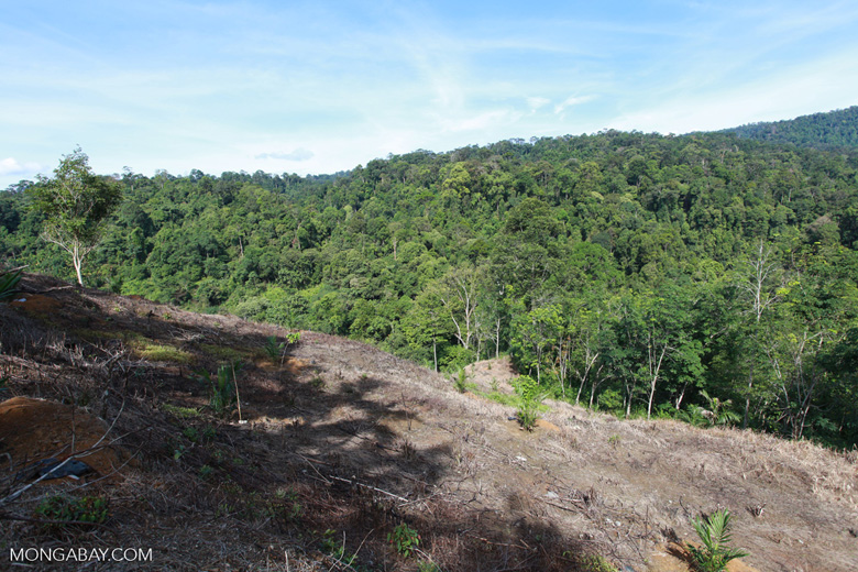 New forest clearing for oil palm on the border of Gunung Leuser National Park