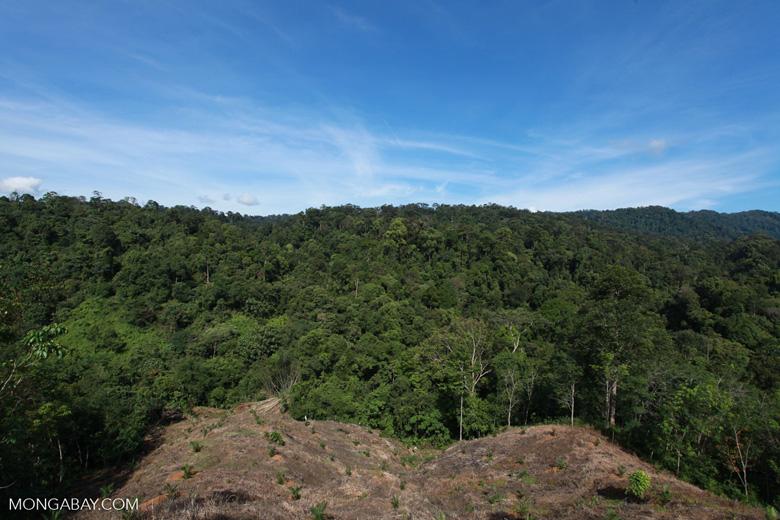 New oil palm development in forest bordering Gunung Leuser National Park