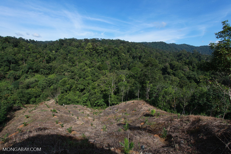 New oil palm planting near a protected area