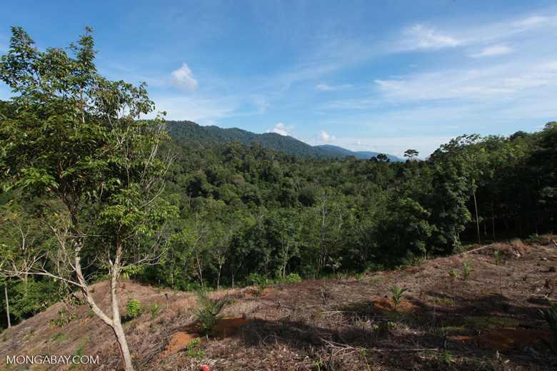 New oil palm development bordering Gunung Leuser National Park [sumatra_0696]
