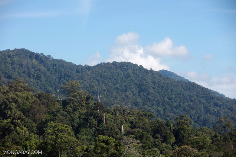 Gunung Leuser Forest