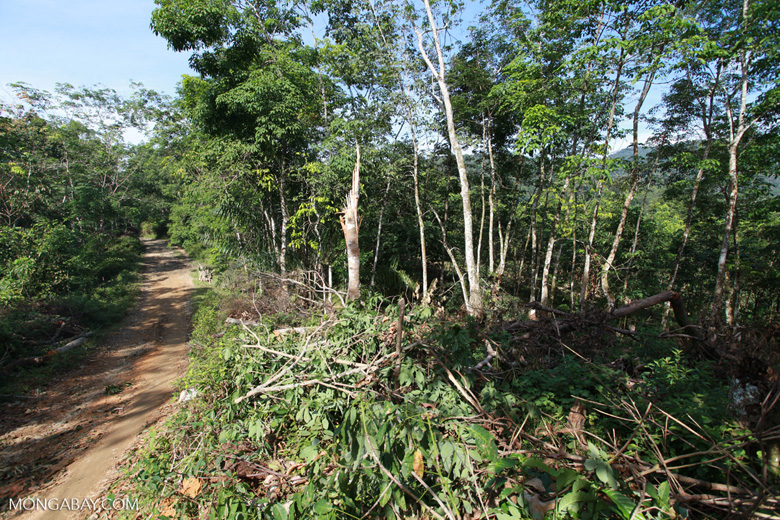 Small-holder rubber plantation [sumatra_0710]