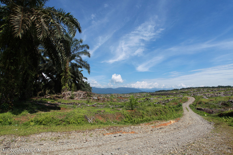 Oil palm plantation near Gunung Leuser National Park [sumatra_0757]