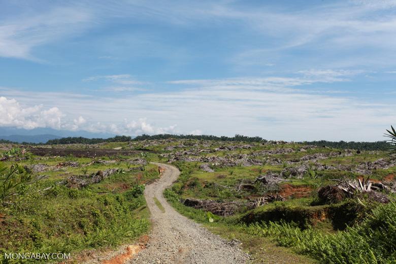 Oil palm plantation near Gunung Leuser National Park [sumatra_0759]