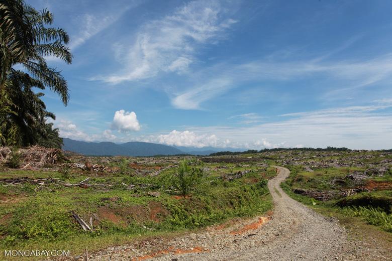 Oil palm plantation near Gunung Leuser National Park [sumatra_0762]