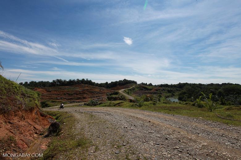 Palm oil: 'greening the Earth' [sumatra_0768]