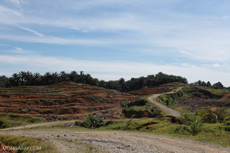 Palm oil: 'greening the Earth' [sumatra_0769]
