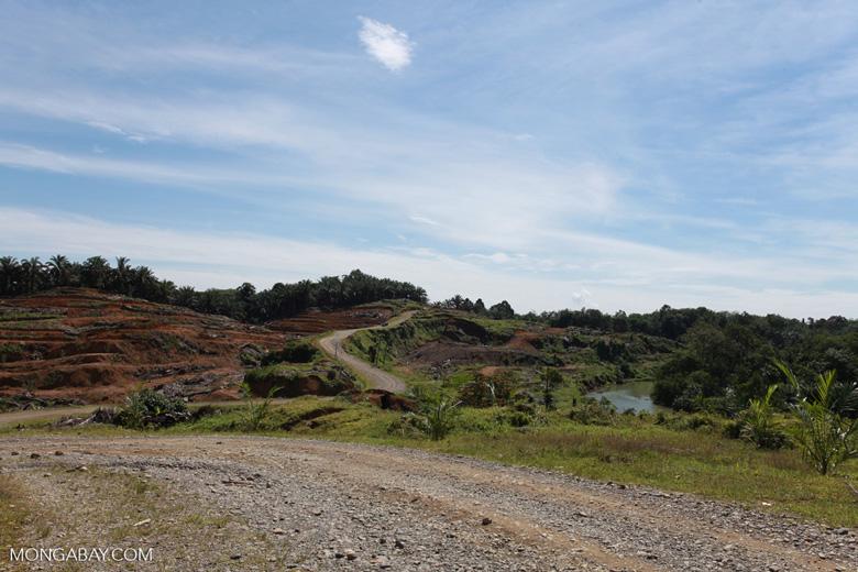 Palm oil: 'greening the Earth' [sumatra_0771]