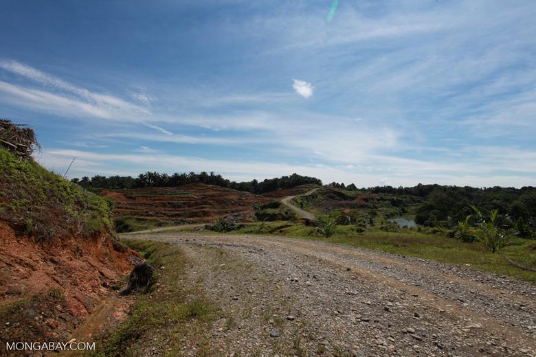 Palm oil: 'greening the Earth' [sumatra_0772]