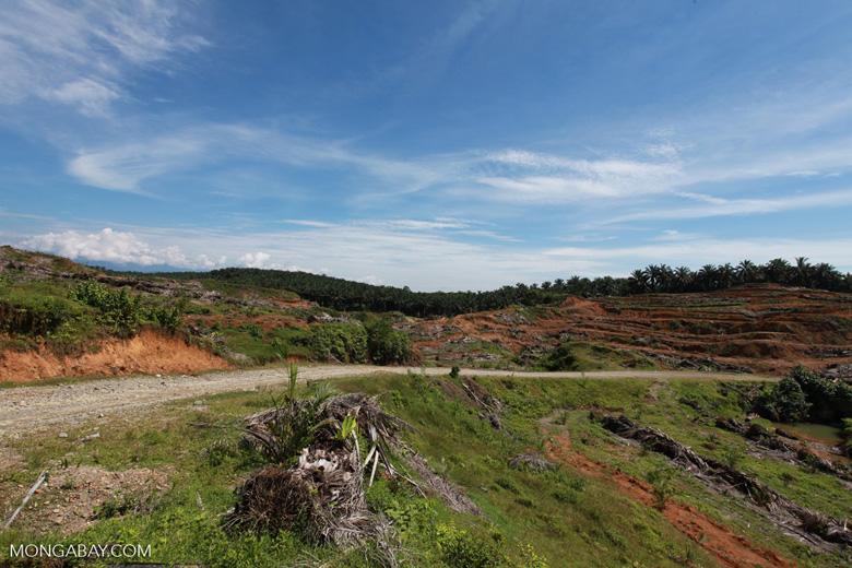 Palm oil: 'greening the Earth' [sumatra_0776]
