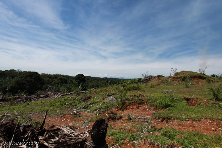 Palm oil: 'greening the Earth' [sumatra_0782]