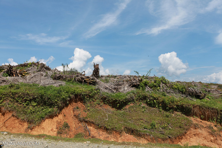 Palm oil: 'greening the Earth' [sumatra_0788]