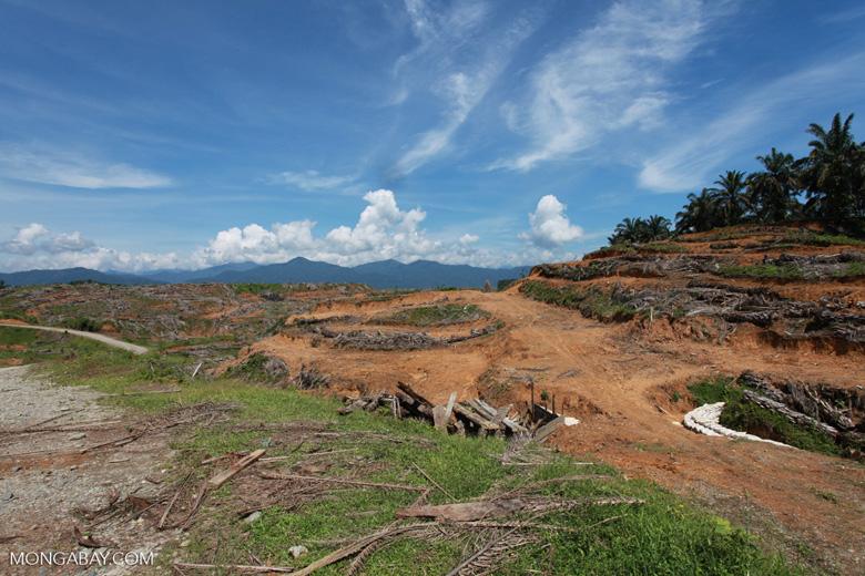 Oil palm plantation near Gunung Leuser National Park [sumatra_0796]