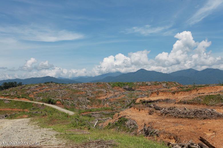 Oil palm plantation near Gunung Leuser National Park [sumatra_0798]