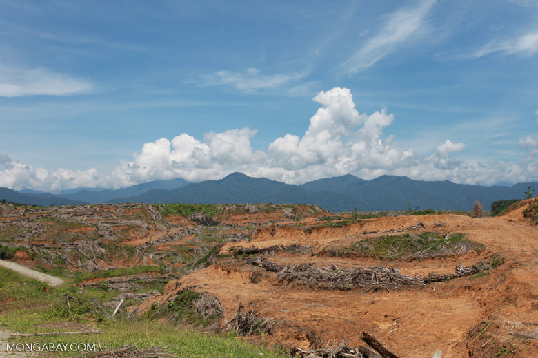 Oil palm plantation near Gunung Leuser National Park [sumatra_0799]