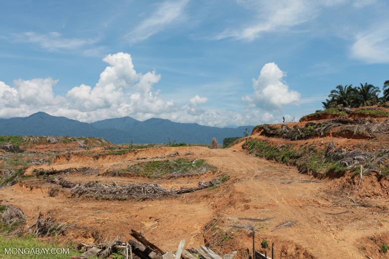 Oil palm plantation near Gunung Leuser National Park [sumatra_0800]